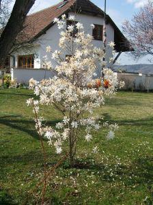 Spring garden - Danube valley Austria