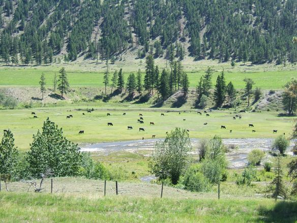 BC Valley pasture