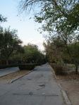Geenery lined street