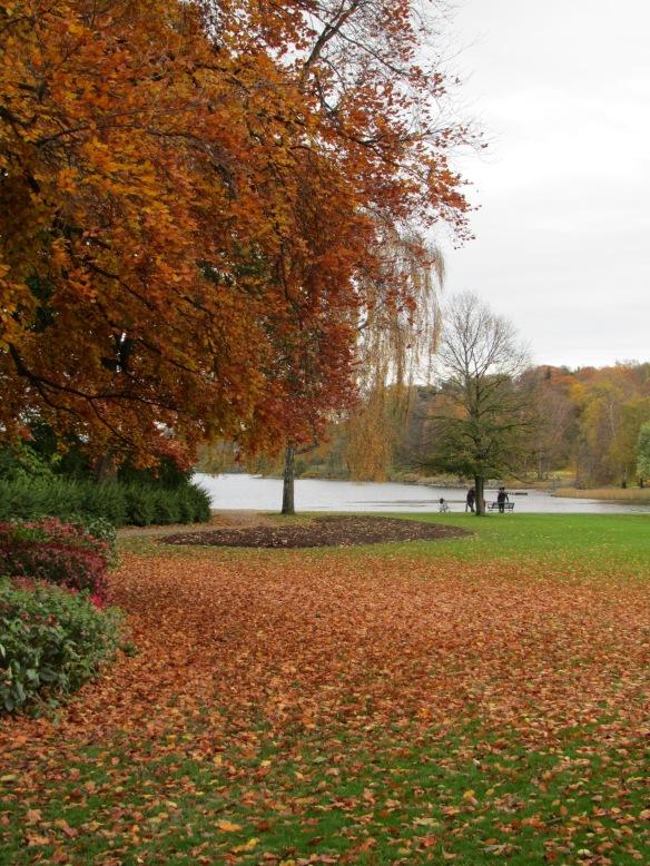 Djurgarden autumn