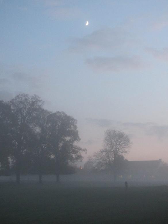 Mist, trees and moon, evening in Belgium