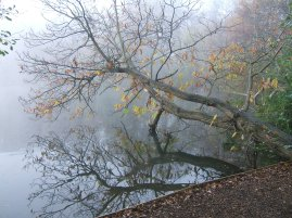 California Country Park Wokingham