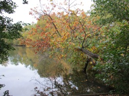 California Country Park, Finchampstead