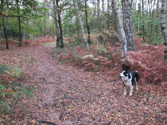 Dog California Country Park Finchampstead Wokingham Berkshire