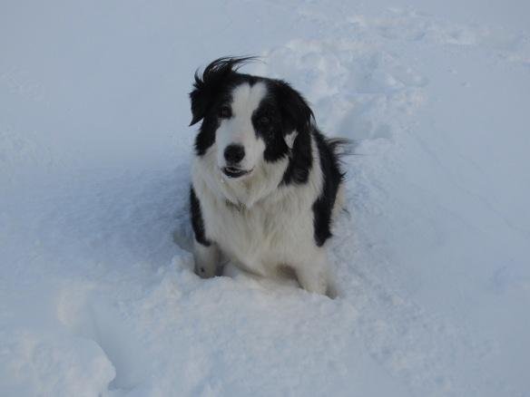 Murphy in snow