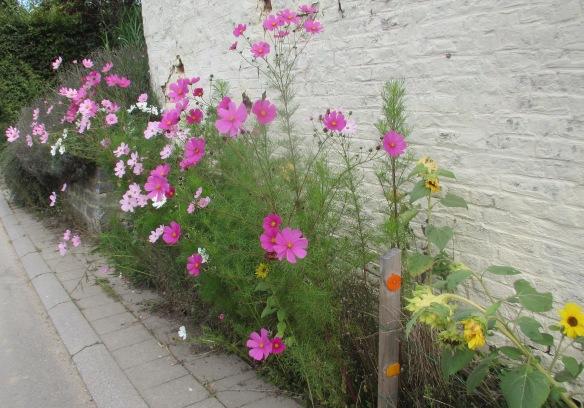Autumn flowers Lasne Belgium