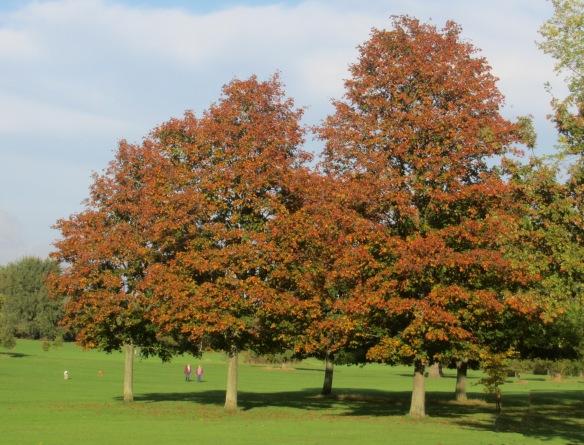 Autumn Cannon Hall Park Barnsley