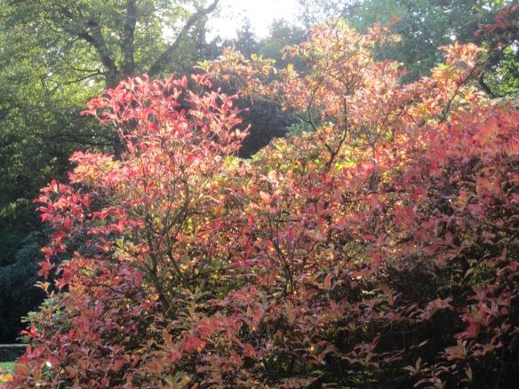 Cannon Hall Park Autumn