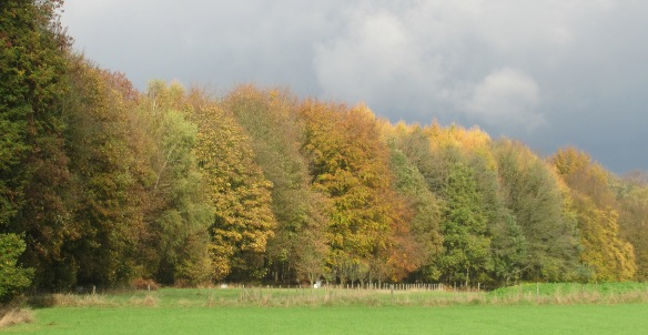 Autumn trees Chapelle St lambert