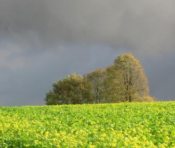 Belgium Wallonia