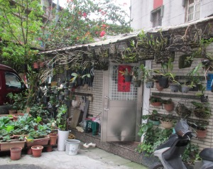 Plants and houses Taipei
