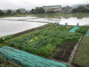 Rice paddy field and vegetable garden Taipei