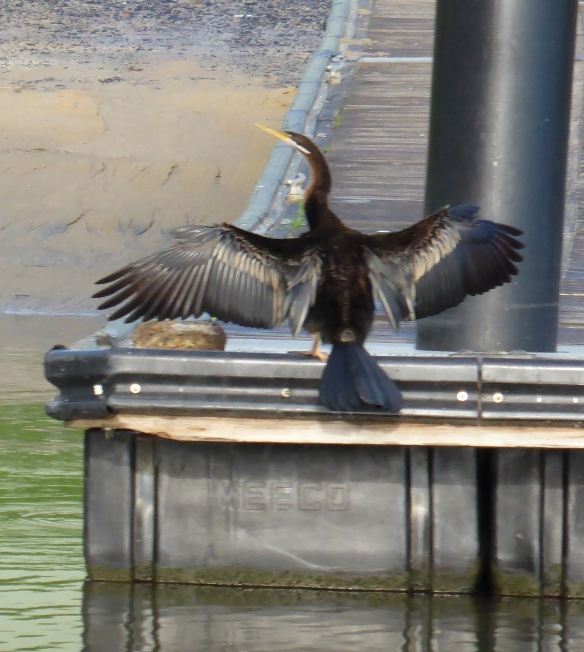 Patterson Lakes wildlife 3