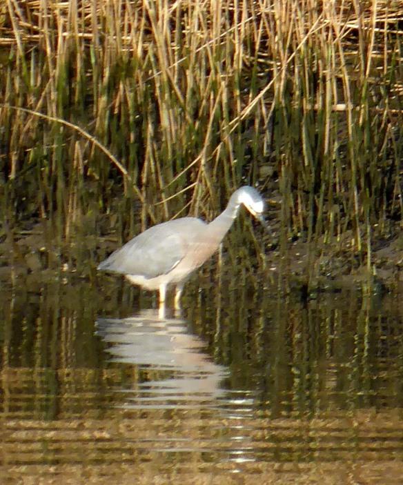 Patterson Lakes wildlife 4