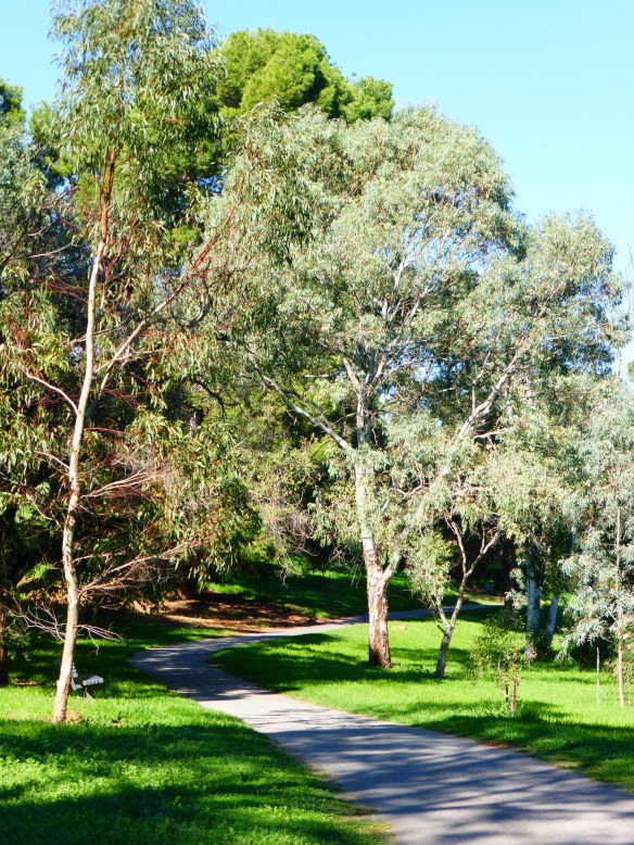 Torrens River Cycle Route Adelaide