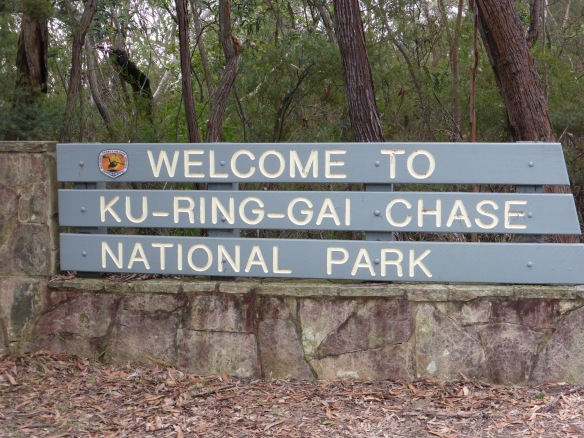 Welcome to Ku-Ring-Gai Chase National Park
