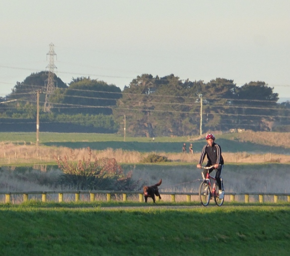 Cycling with dog Invercargill