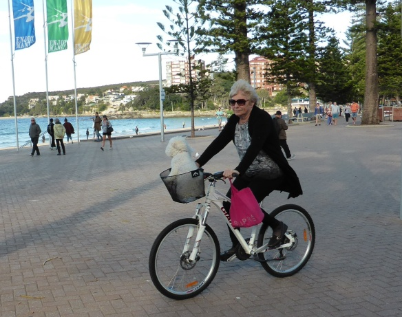 lady cycling with dog in Manly