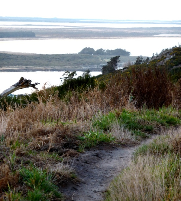 Bluff Hill Mountain bike track with sea view New Zealand