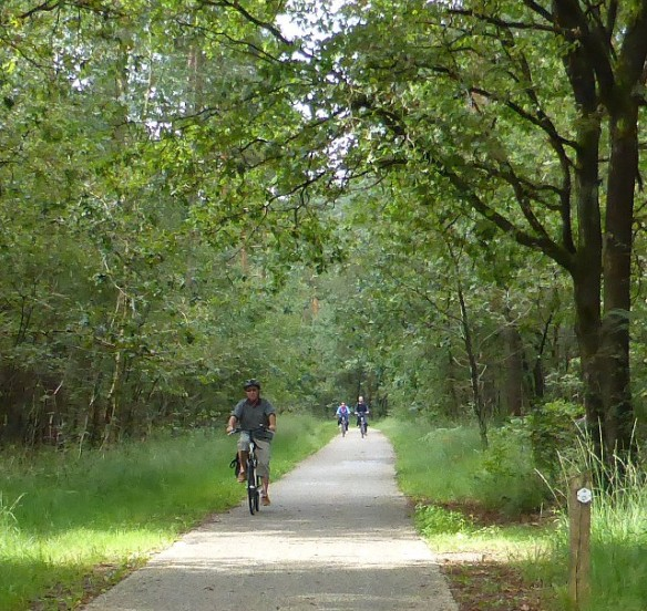Forest cycle paths in Hoge Kempen National Park