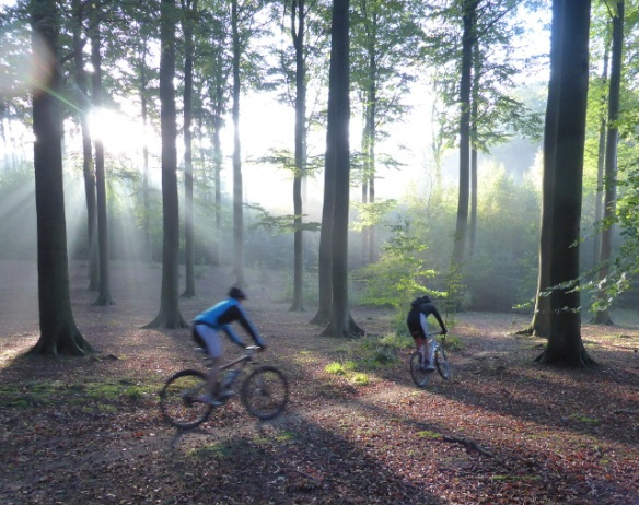 Mountain biking in the Walloon forests El Botroul