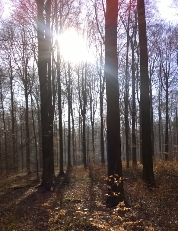 Belgian woods March 2015