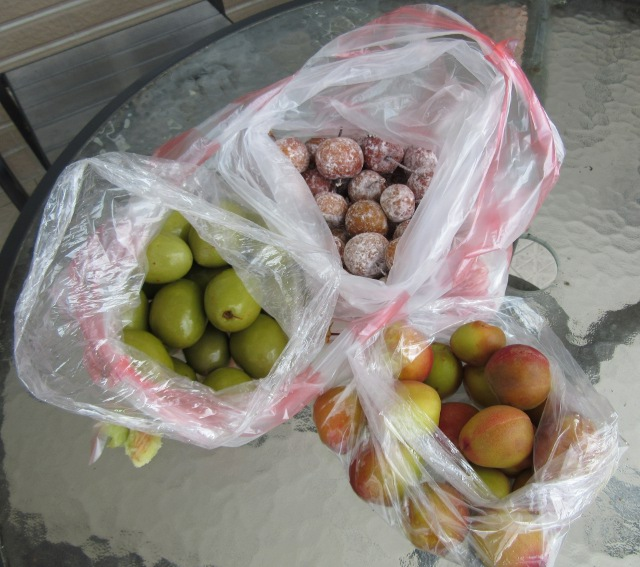 Taiwanese fruits and Taiwan olives | I Do Not Despair