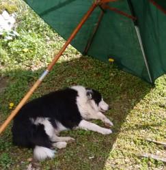 IMG-20190418-WA0000 Murphy napping