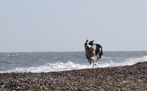 Murphy on beach 2006