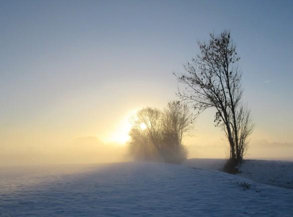 Copyright photo Kevin Mayne sun rising behind a tree